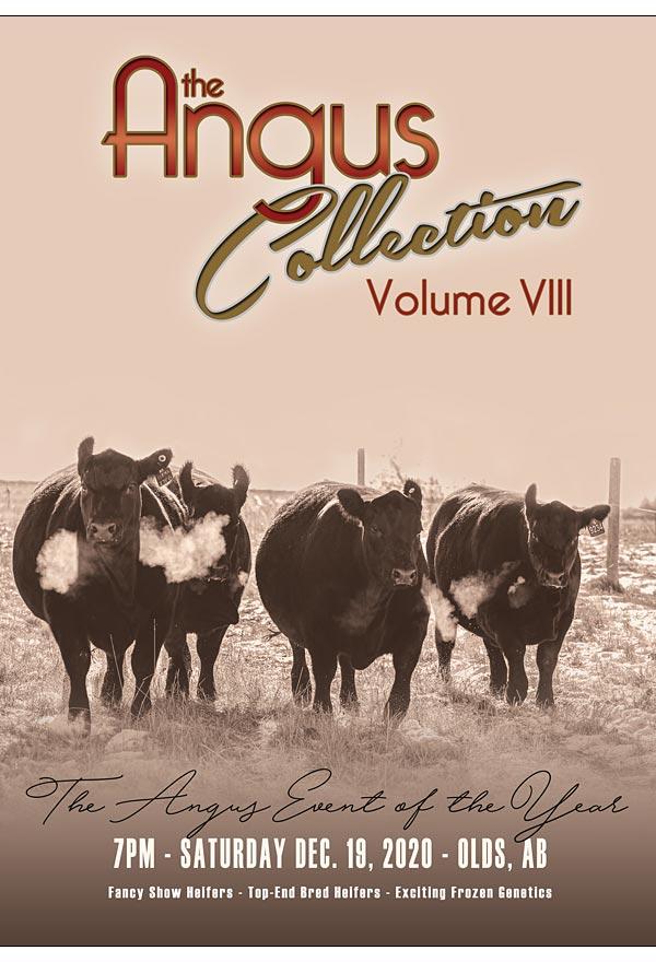 Angus Collection