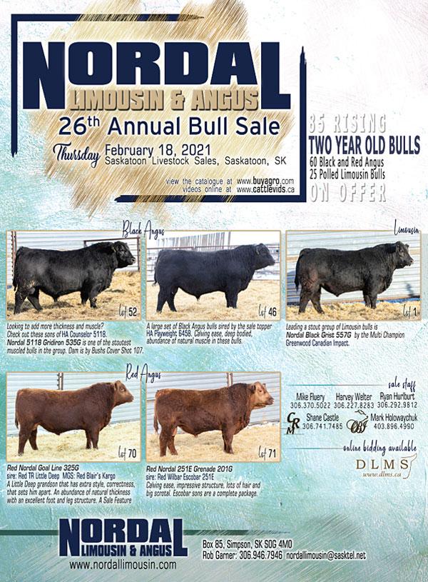 Nordal Bull Sale